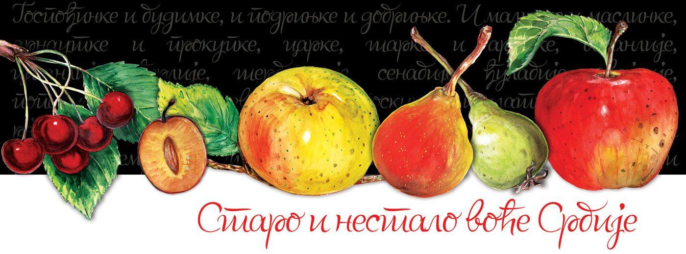 Izložba Staro i nestalo voće Srbije crtež, grafika